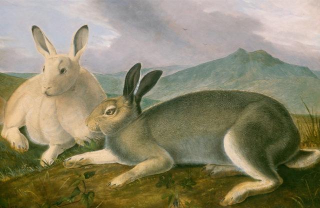 Картины и репродукции художников